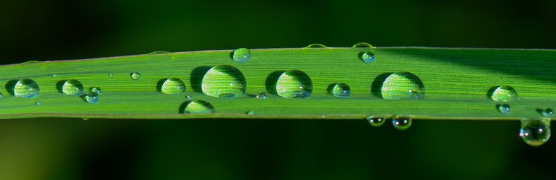 rsz_water-drops-leaf